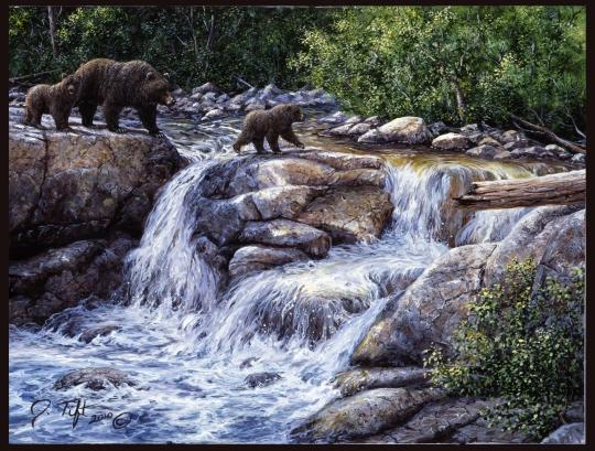 entiat falls bear family